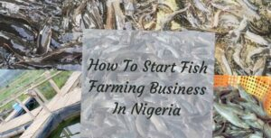 Fish Farming Business In Nigeria