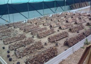 Snail Farming Business in Nigeria