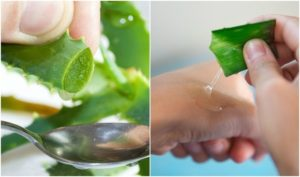 Benefits & Things You Can Do With Aloe Vera