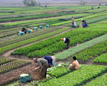 ECOWAS Agriculture