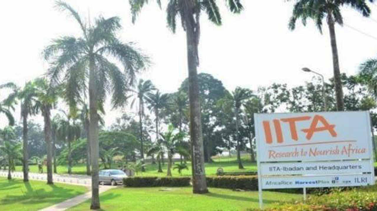 IITA Recruitment Job