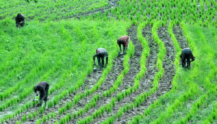 Crop Farming Business