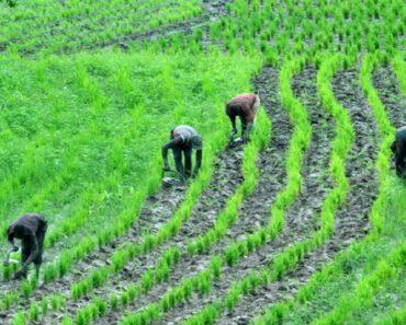 Most Profitable Farming Business