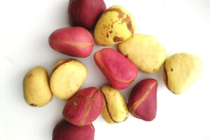 Kola Nut Hospitality In Igede