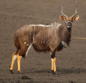Beautiful Animals In Africa
