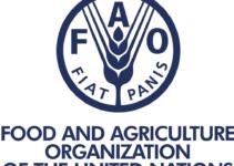 Food and Agriculture Organization Internship