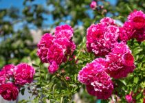 Profitable Flower Business in Nigeria