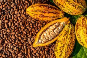 Cocoa Bean Prices Per Ton and Kilo
